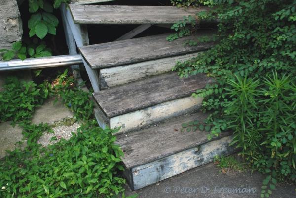 Back Steps