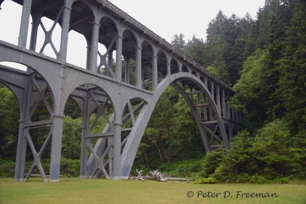 Bridge to Nature