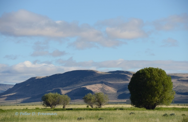 Wyoming pasture